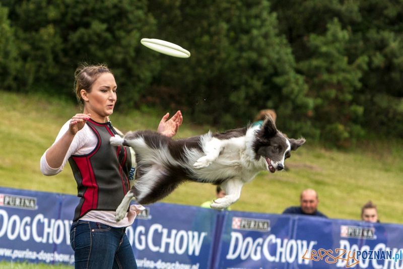 Dog Chow Disc Cup 2014