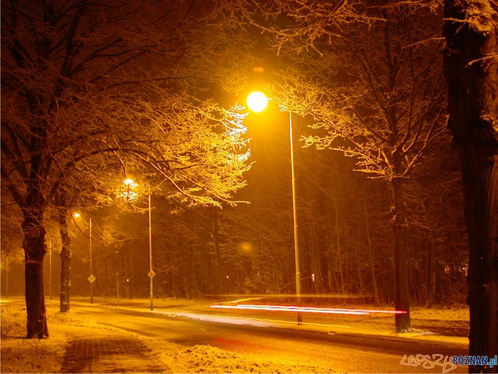 zima  Foto: sxc