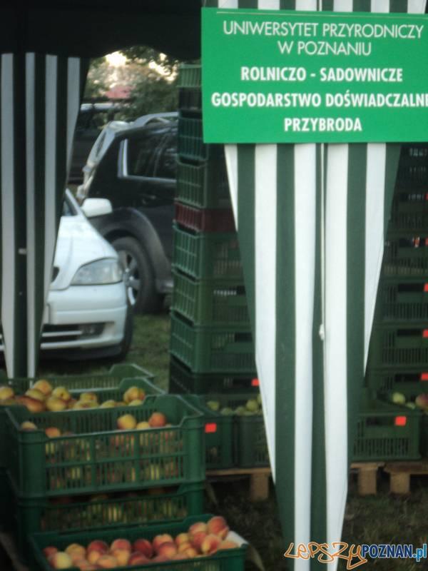 Rokietnica zaprasza Wielkopolan na rumpuć  Foto: Koczorowa
