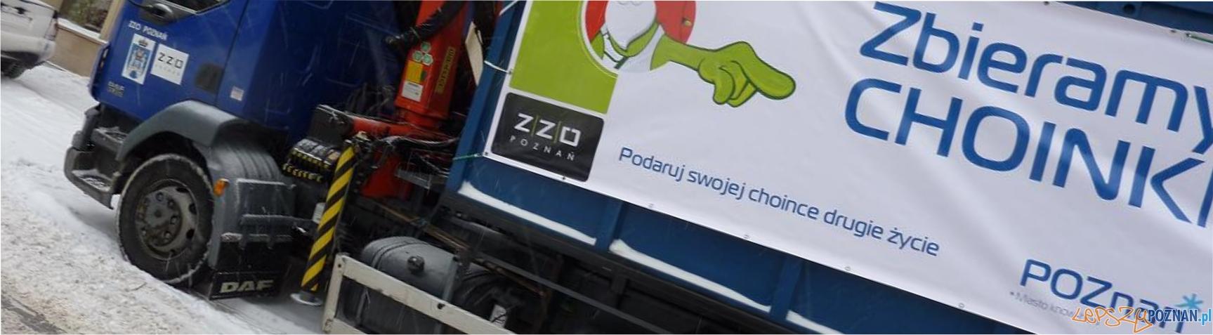 panorama choinki  Foto: ZZO Poznań