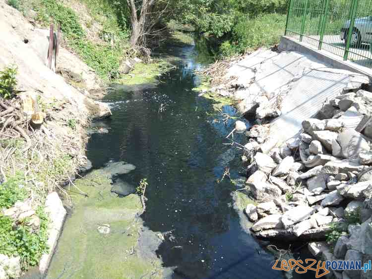 Zanieczyszczona Struga Średzka  Foto: zmiana III JRG-6