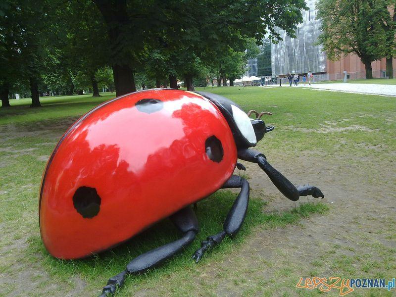 Gigantyczne owady w Starym Browarze (13)  Foto: