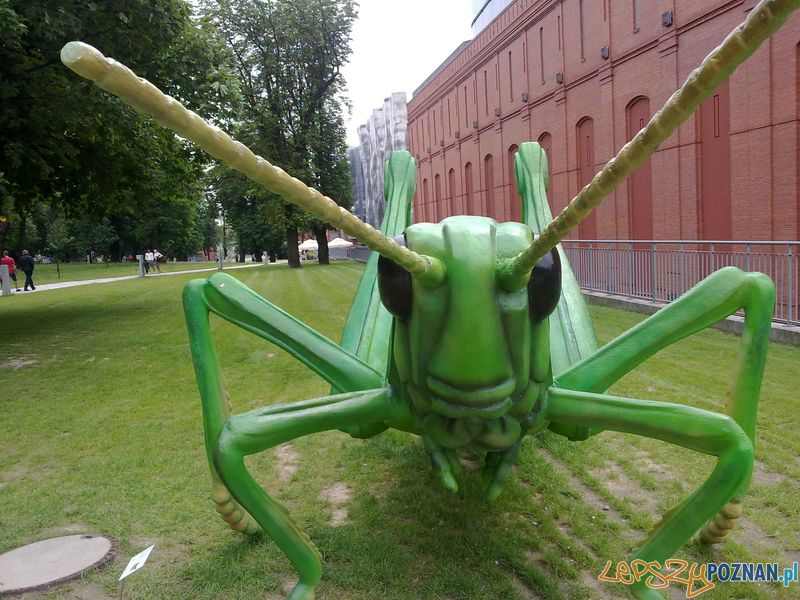 Gigantyczne owady w Starym Browarze (15)  Foto: