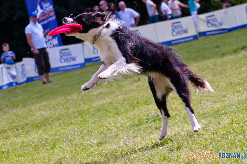 Dog Chow  Cup 2012 w parku Cytadela - Poznań 12.08.2012 r.  Foto: LepszyPOZNAN.pl / Paweł Rychter