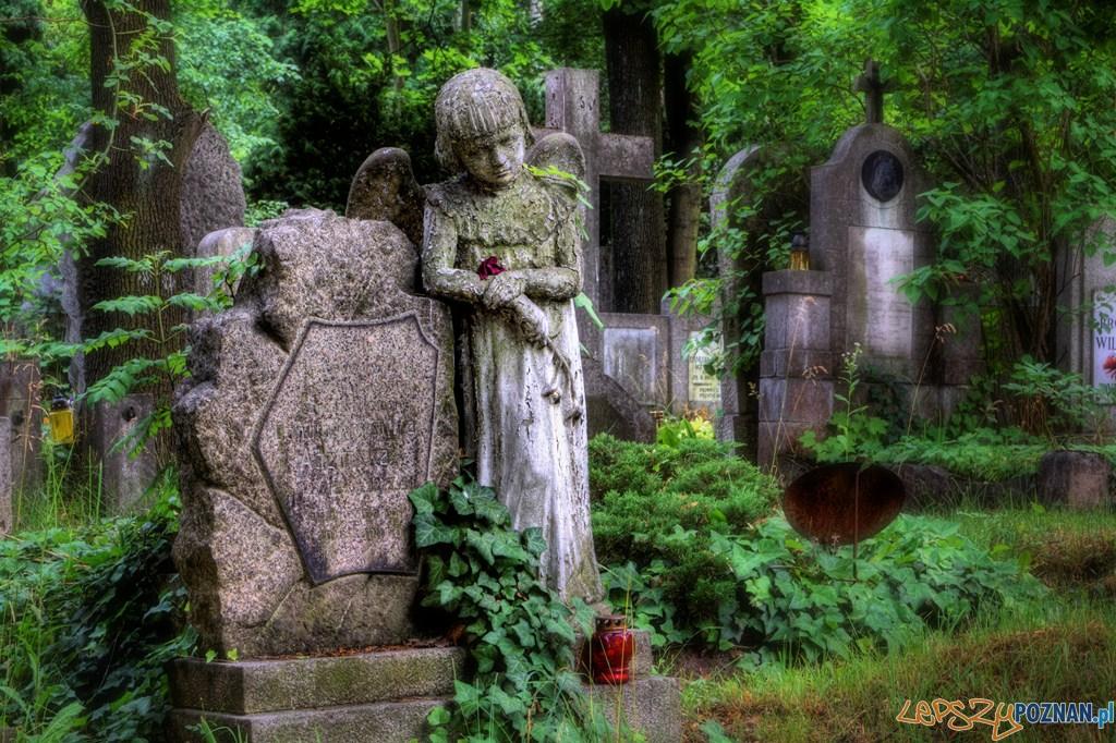 cmentarz na Nowinie  Foto: FotoPortal / Radosław Maciejewski