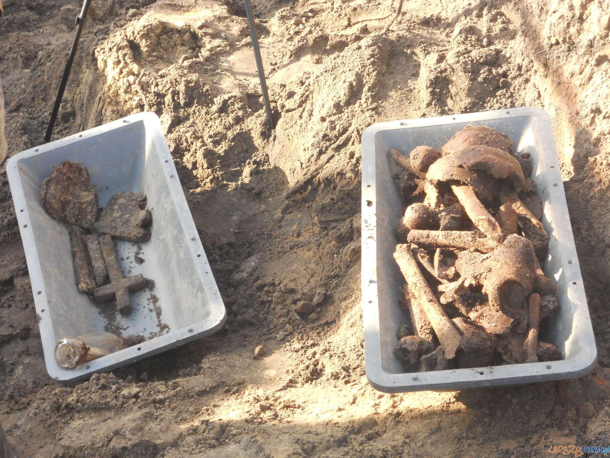 Wydobycie szczątków Kosynierów Junikowskich  Foto: Rada Osiedla Junikowo