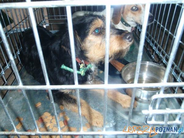 Porzucone psy w Luboniu  Foto: UM Lubonia