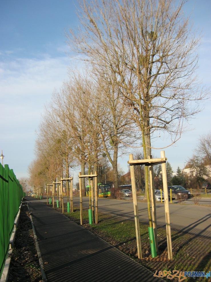 Rekultywacja zielenii na Dąbrowskiego  Foto: ZDM