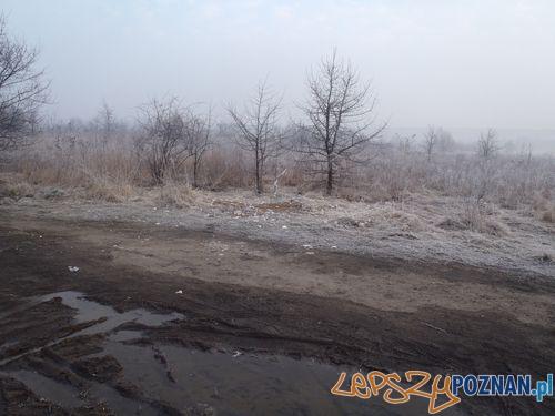 Uprzątnięty teren  Foto: Straż Miejska
