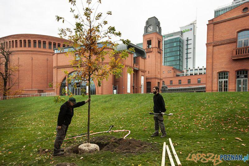 Nowe drzewa  Foto: