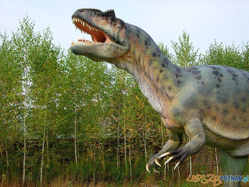 Allozaur w -Bałtów Park Jurajski  Foto: CC/wikipedia