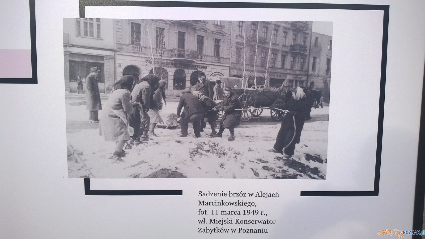 Poznańskie archiwa na Placu Wolności (2)  Foto: TD