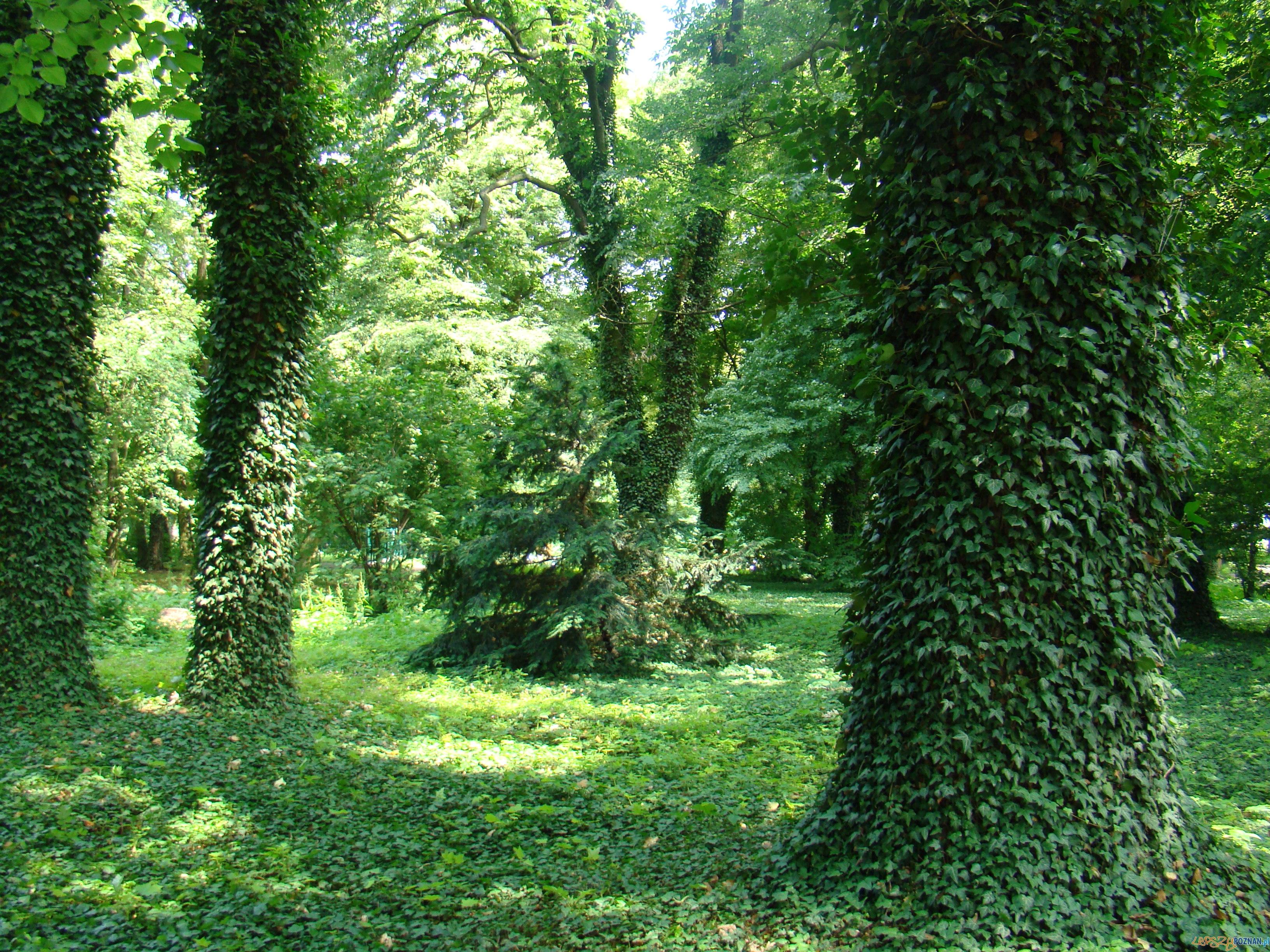 Park Podworski w Plewiskach  Foto: UMiG Komorniki