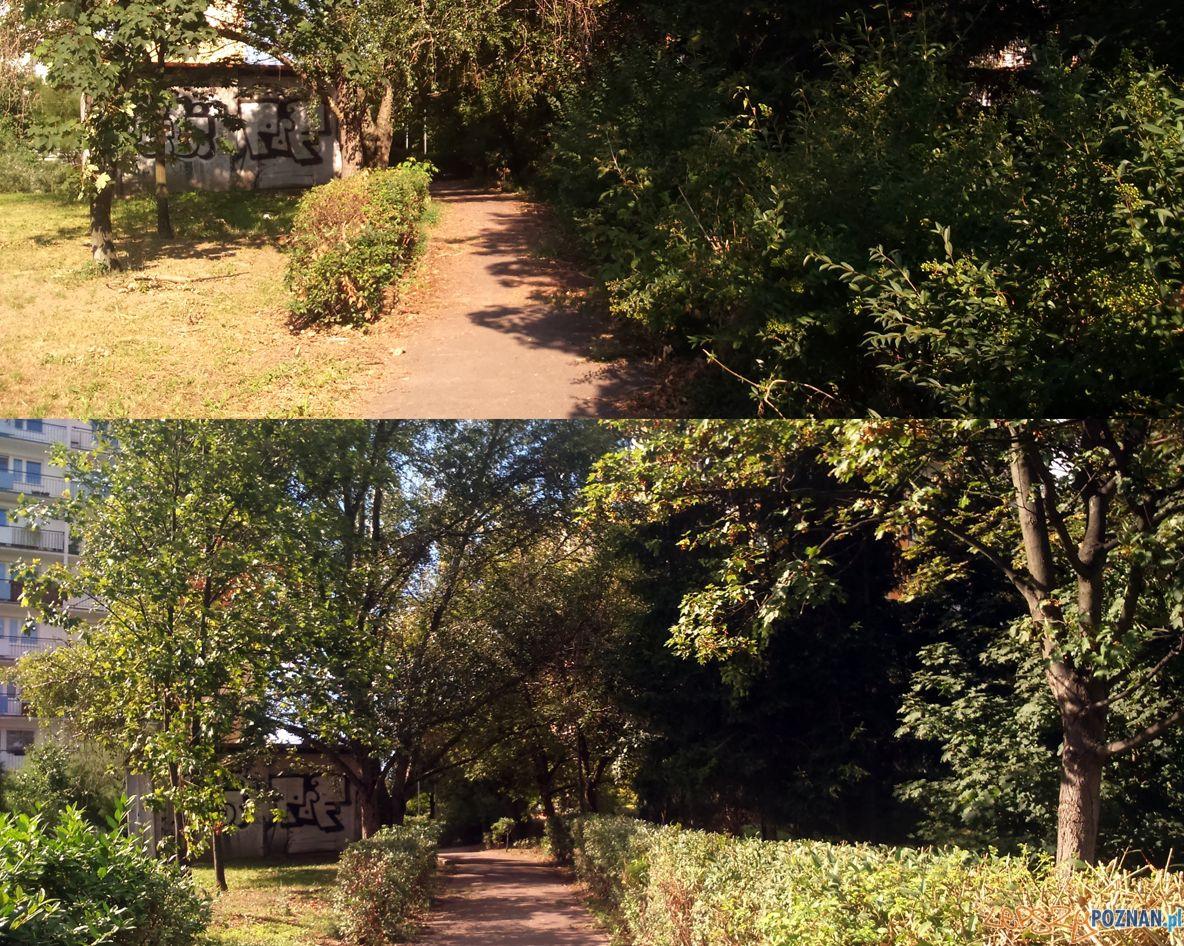 Ostre cięcie zieleni na Winiarach  Foto: Straż Miejska