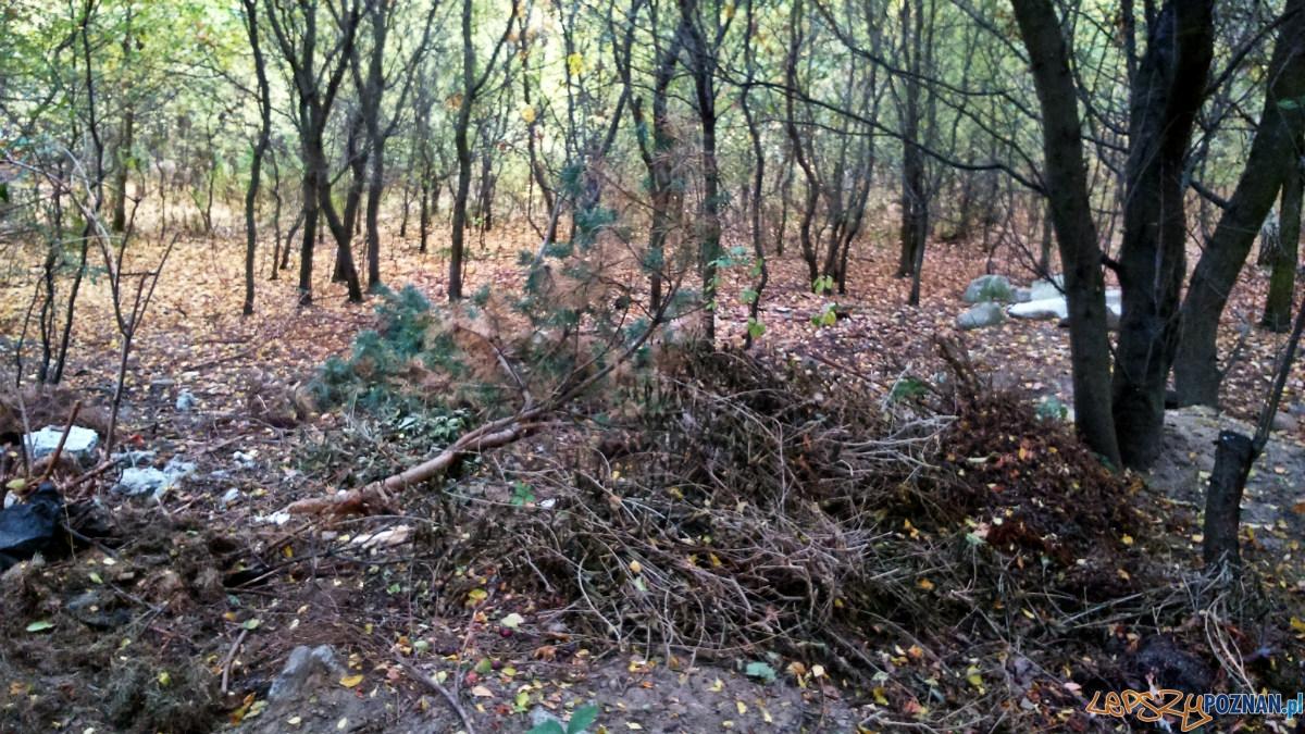 Nielegalne śmieci - tym razem zielone  Foto: