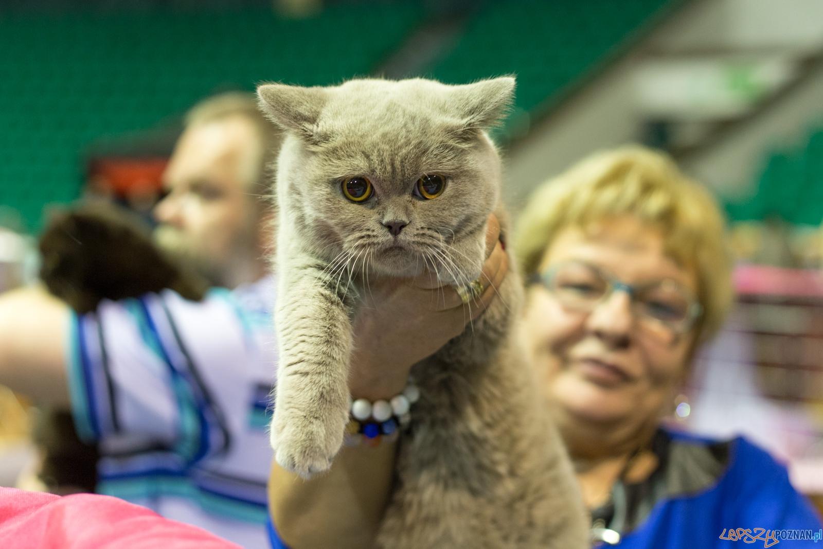 Międzynarodowa Wystawa Kotów Rasowych  Foto: lepszyPOZNAN.pl / Piotr Rychter