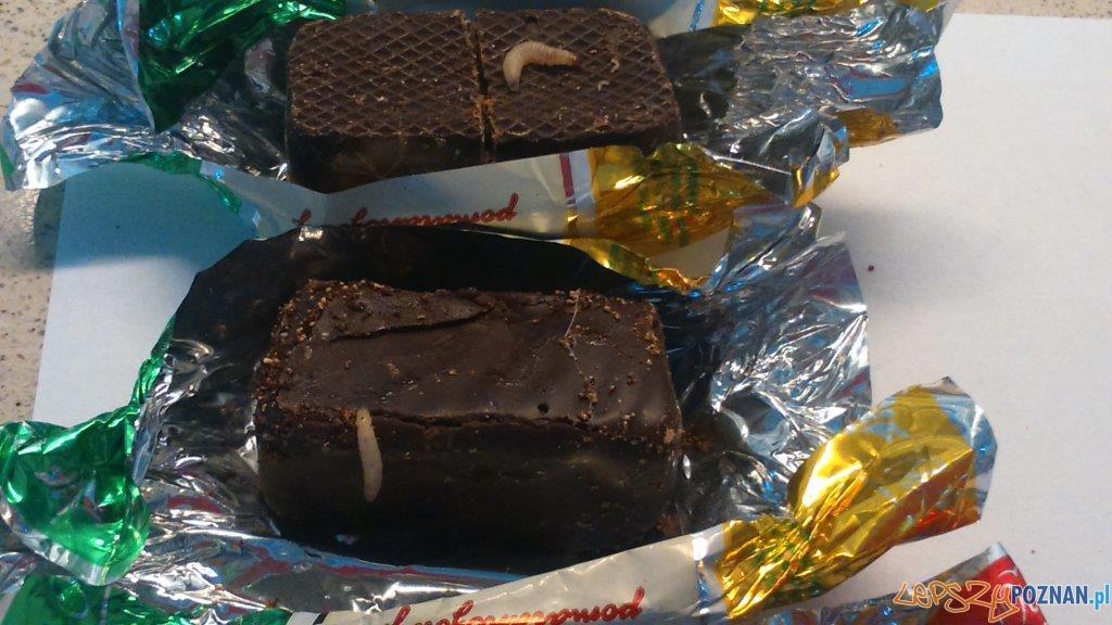 galaretki w czekol. z larwami  Foto: Laboratorium Badania Żywności i Przedmiotów Użytku Wojewódzkiej Stacji Sanitarno-Epidemiologicznej w