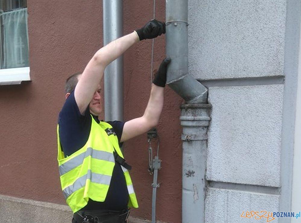 Straż rartuje uwięzionego w rynnie ptaka  Foto: Straż Miejska