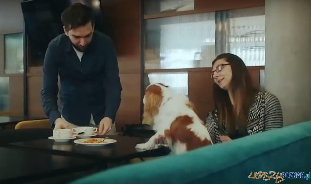 Master Chef 4 Dogs  Foto: kadr z filmu promocyjnego