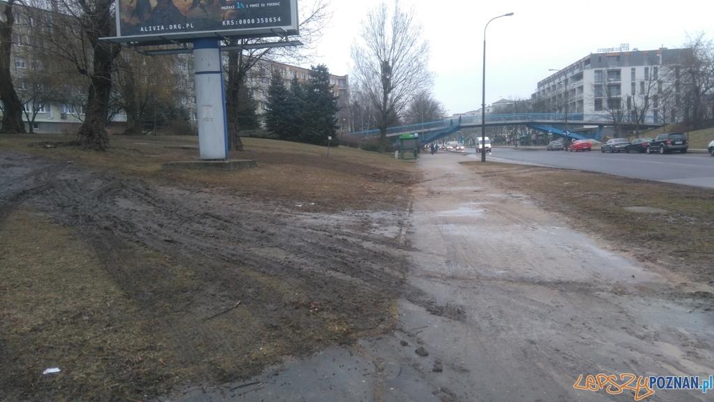 Ul. Słowiańska - rozjechany trawnik  Foto: St