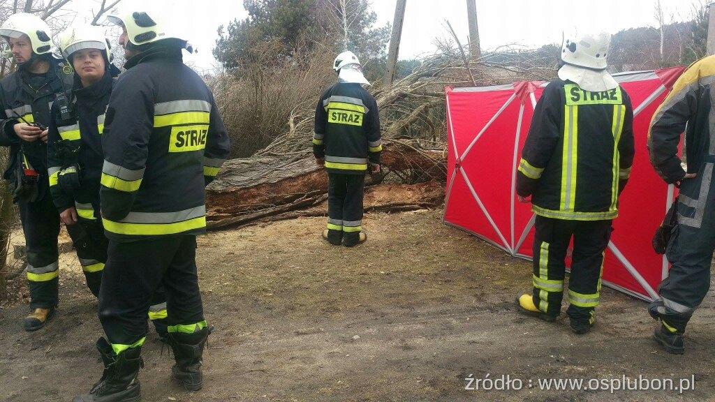 Śmiertelna ofiara wycinki drzew!  Foto: OSP Luboń
