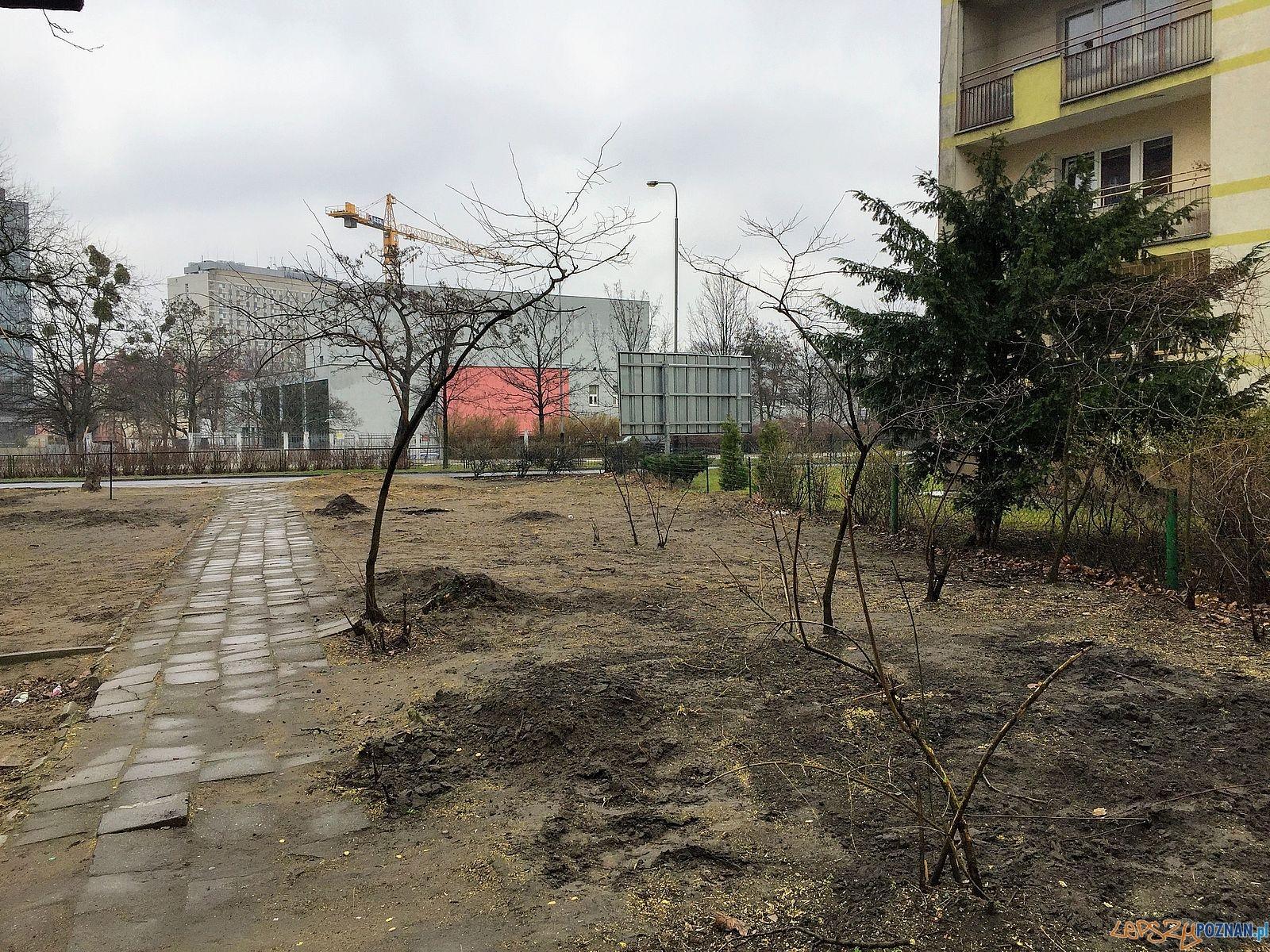 Wycinka drzew na Solnej  Foto: Marcin Liminowicz / Rada Osiedla Stare Miasto