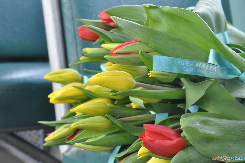 Tulipany na Dzień Kobiet  Foto: MPK