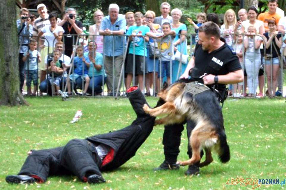 Pokaz wyszkolenia kejtrów policyjnych  Foto: KWP