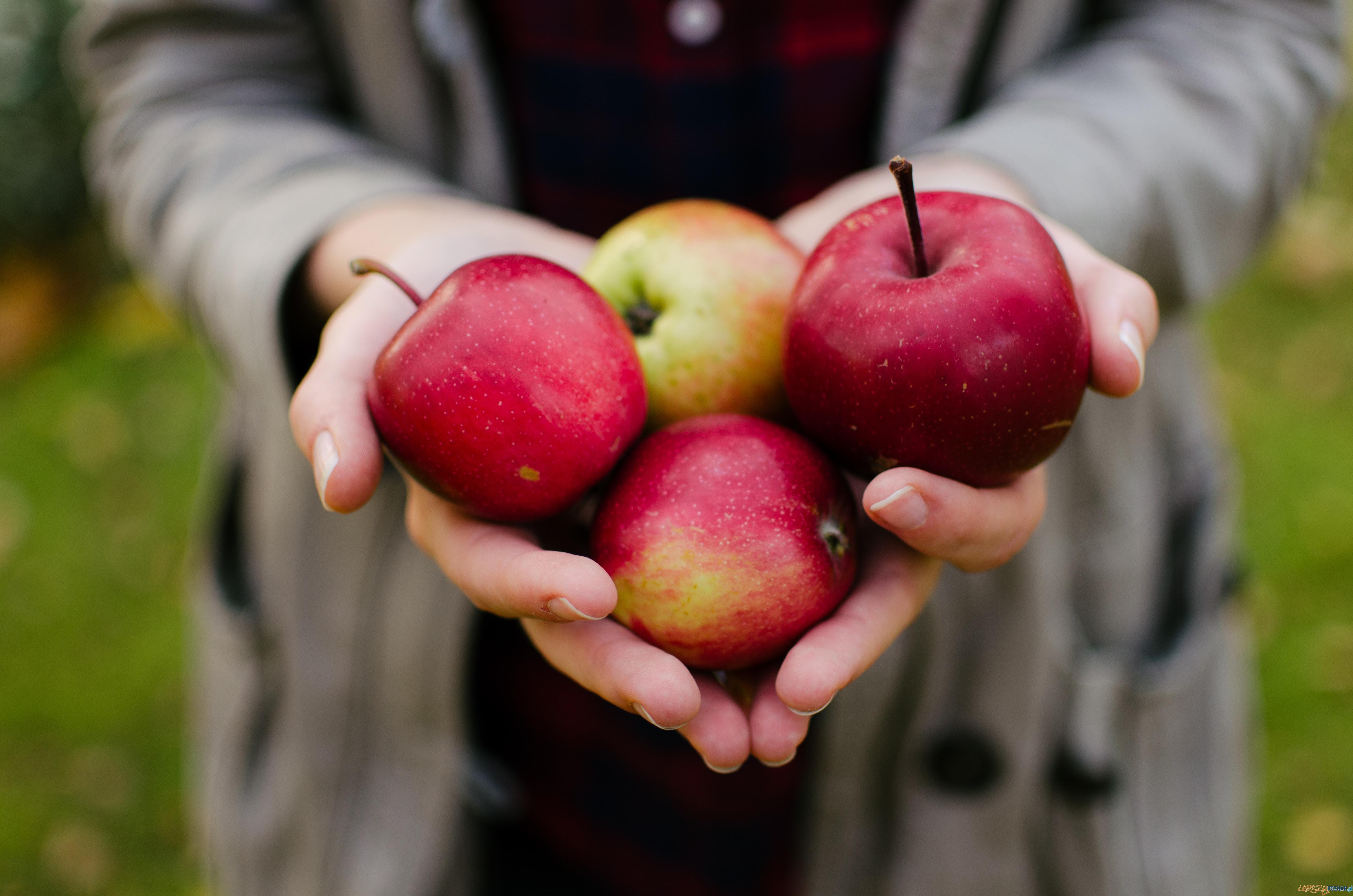 Jabłka  Foto: Aaron Blanco Tejedor