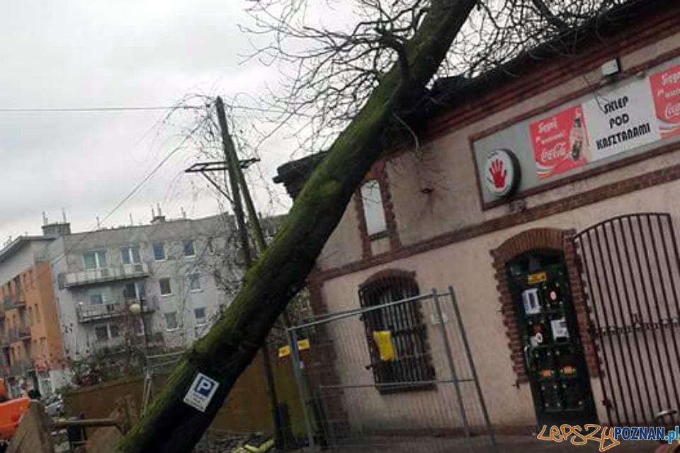 Drzewo przewróciło się na sklep  Foto: OSP Pobiedziska
