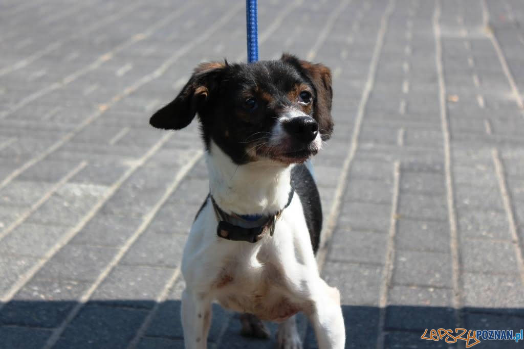 Psy z ulicy Głównej  Foto: Schronisko dla zwierząt w Poznaniu / facebook