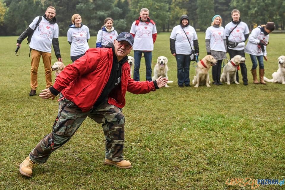 40 psów rasy Golden Retriever będzie kwestować w Poznaniu  Foto: