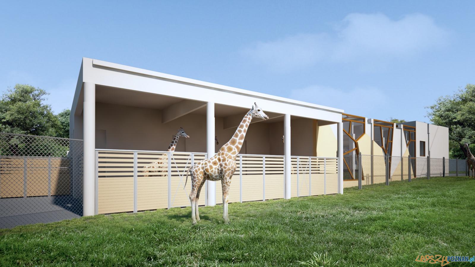 Nowy wybieg dla żyraf  Foto: wizualizacja pim