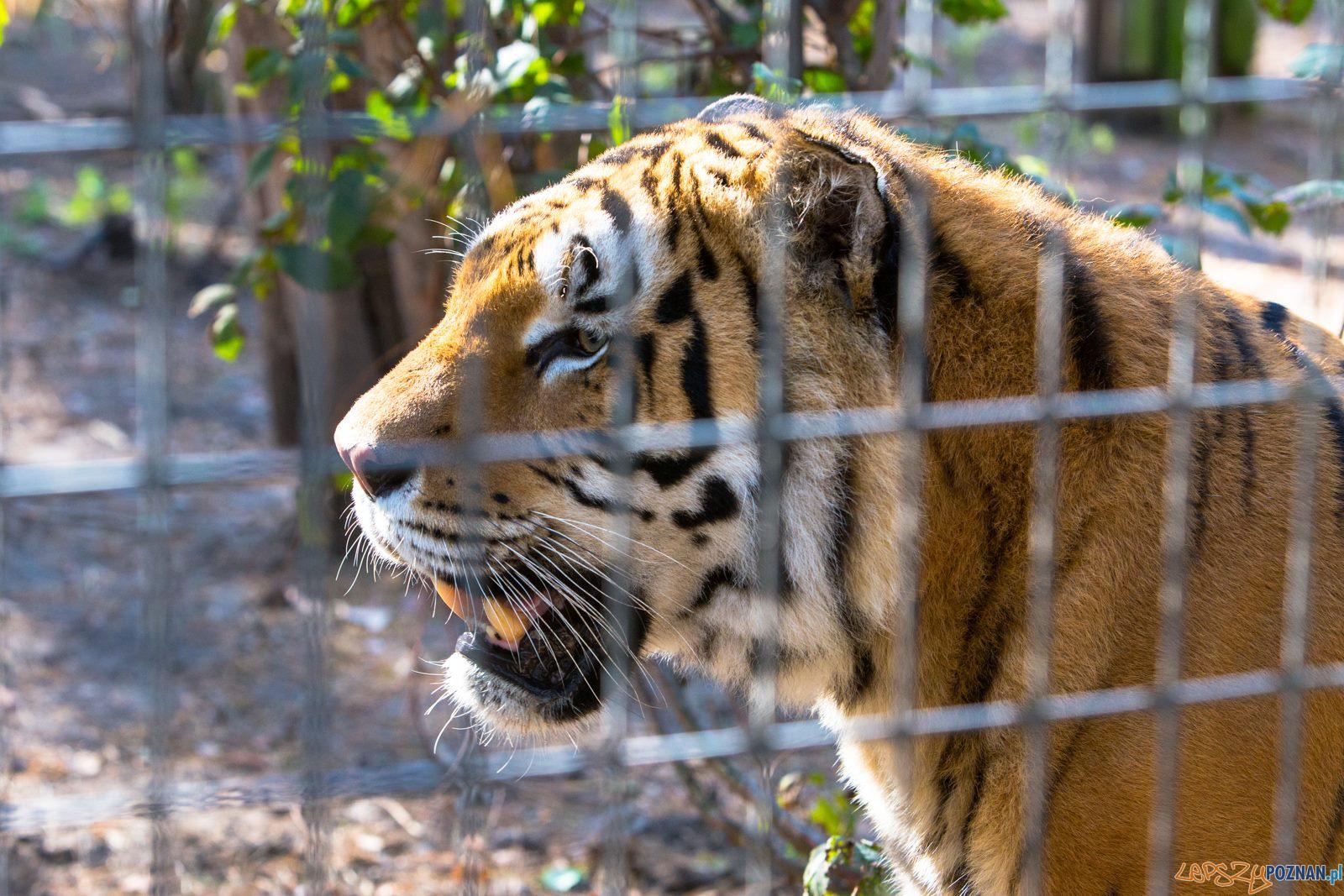 Mieszkańcy zoo  Foto: lepszyPOZNAN.pl/Piotr Rychter