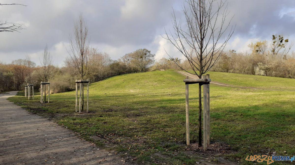 Drzewa frekwencyjne na Ławicy Foto: UMP