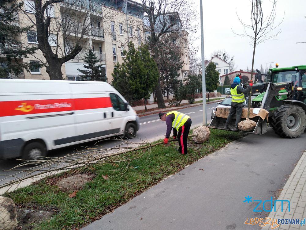 Sadzenie drzew na ul. Milczańskiej Foto: ZDM
