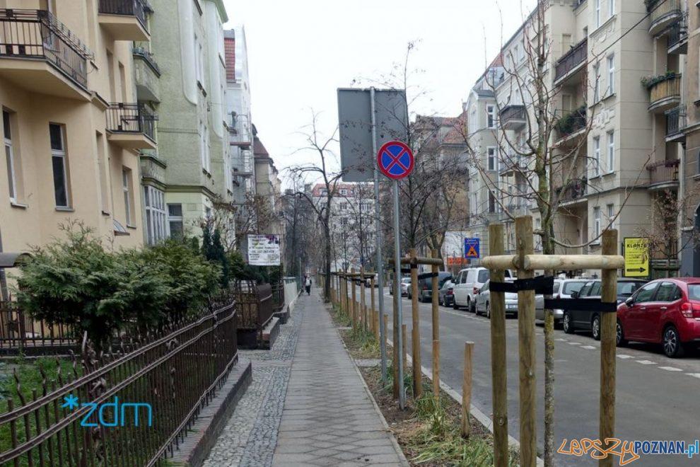 Nowe drzewa na Poplińskich  Foto: materiały prasowe ZDM