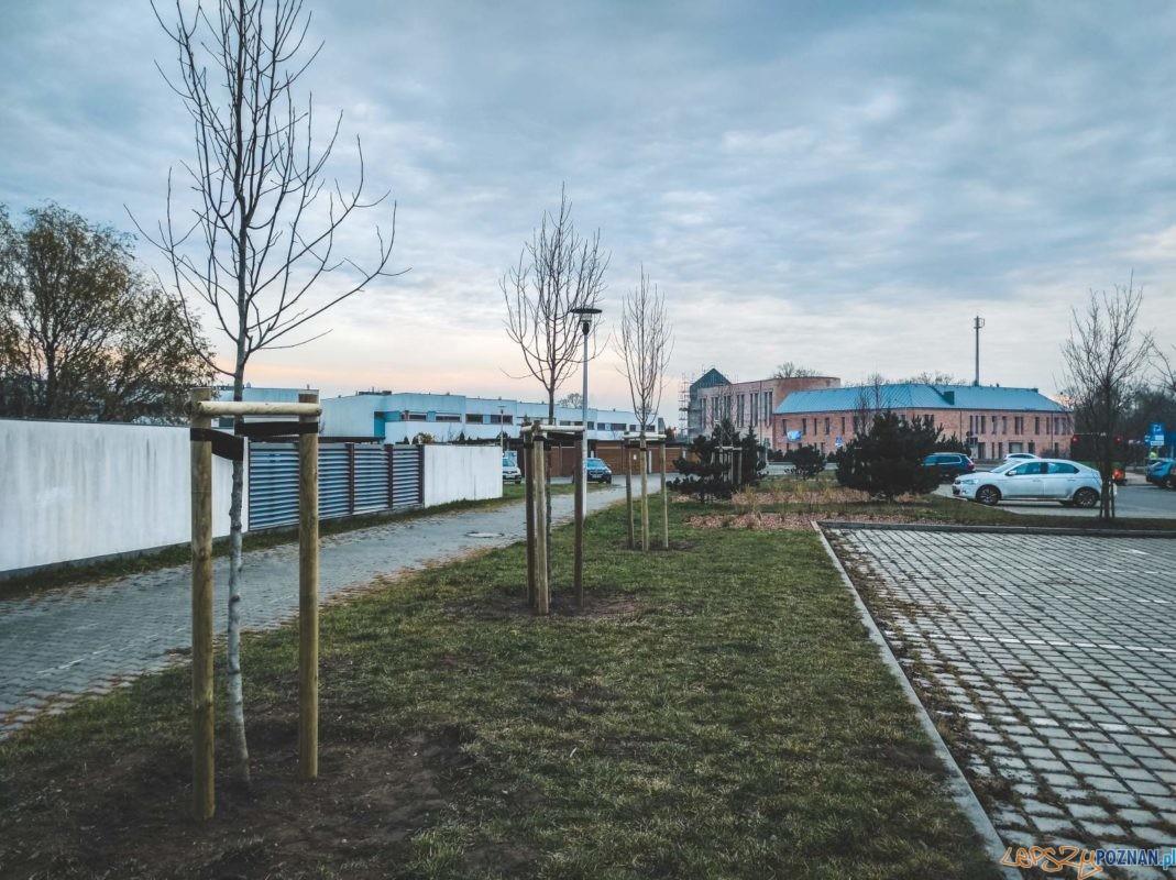 Nowa zieleń w Dąbrówce Foto: UG Dopiewo