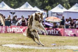 Latające Psy  Foto: lepszyPOZNAN.pl/Ewelina Jaśkowiak