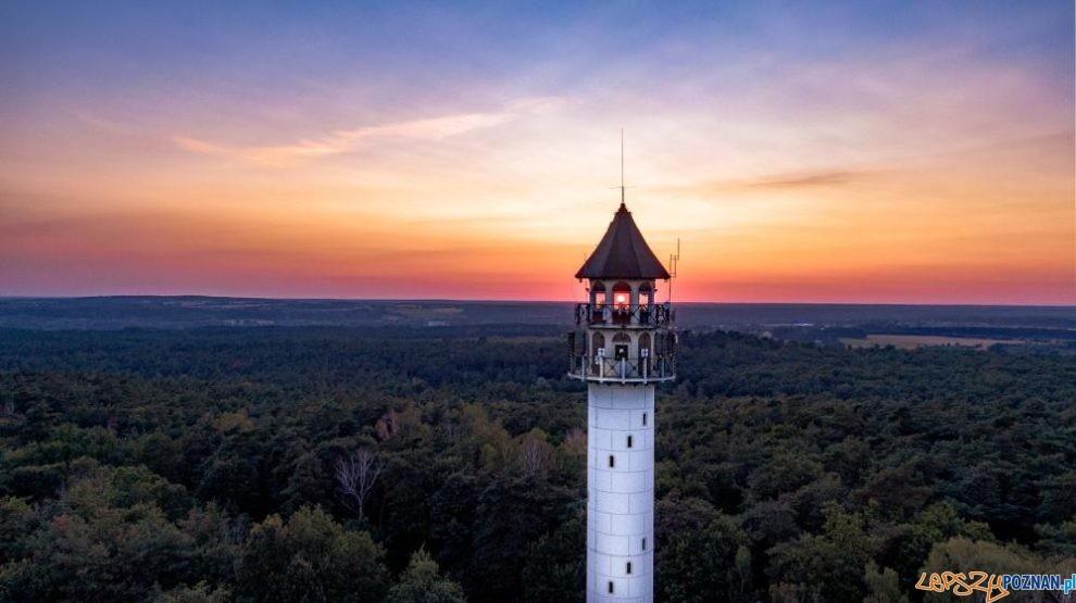 Wieża widokowa na Dziewiczej Górze  Foto: materiały prasowe / /lopuchowko.poznan.lasy.gov.pl / Dominik Maćkowiak