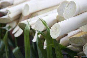 Serce palmy  Foto: ©Dionisio - stock.adobe.com / materiały prasowe